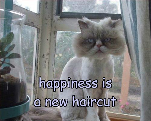 happiness is  a new haircut