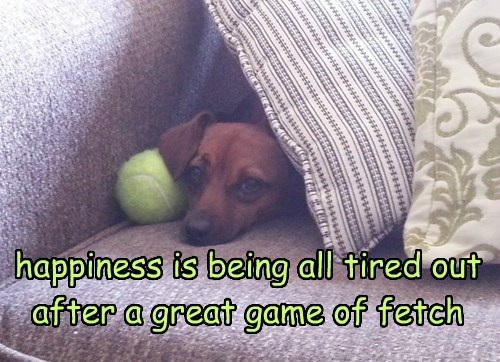 happiness is being all tired out after a great game of fetch