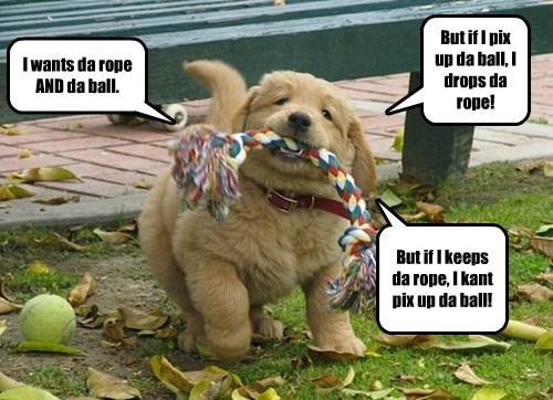 First World Puppy Problems
