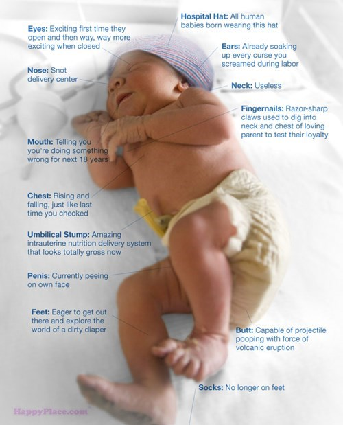 Anatomy of a Baby