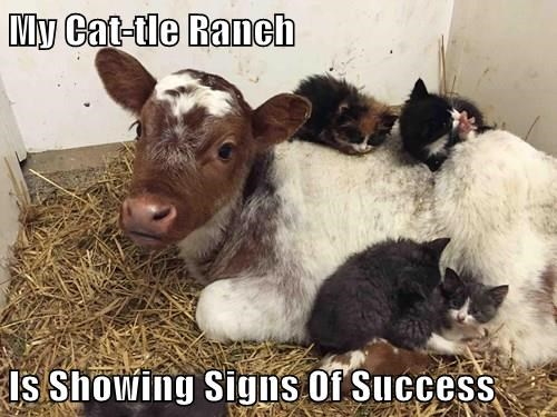 ranch,hybrid,Cats,cows