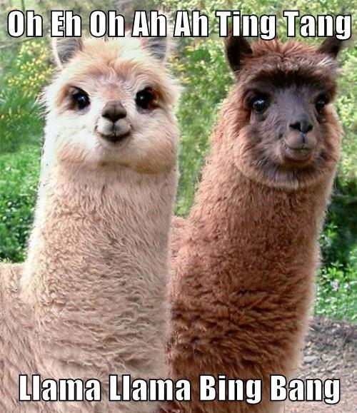 Oh Eh Oh Ah Ah Ting Tang   Llama Llama Bing Bang