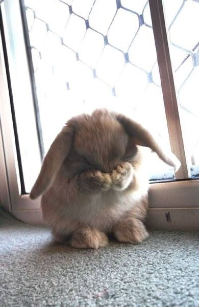 Every Bunny Doesn't Want The Weekend To End