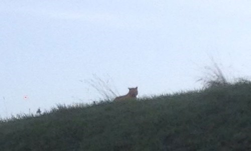 Cat Hunt of the Day: Big Cat Spotted Lurking Near Disneyland Paris