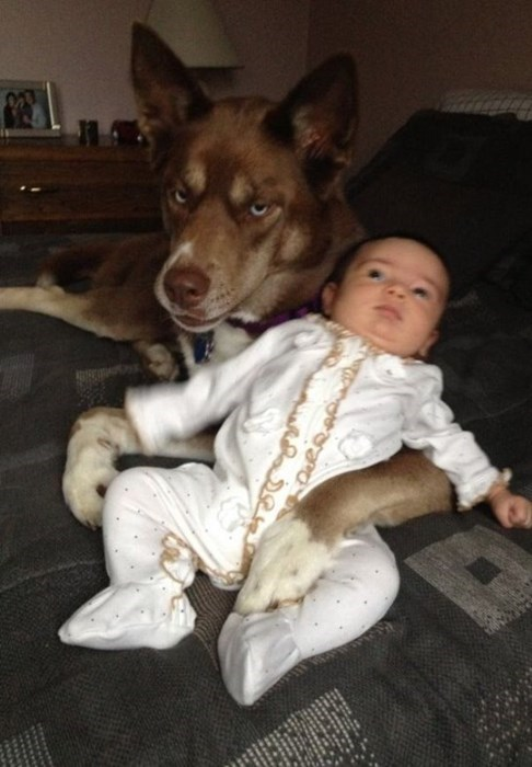 dogs,baby,expression,parenting