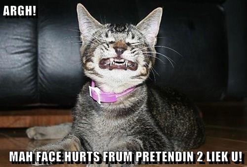pretend,Cats,smile