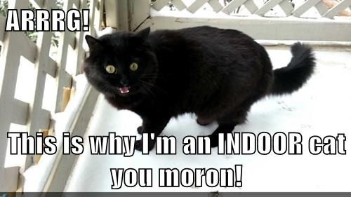 ARRRG!  This is why I'm an INDOOR cat you moron!