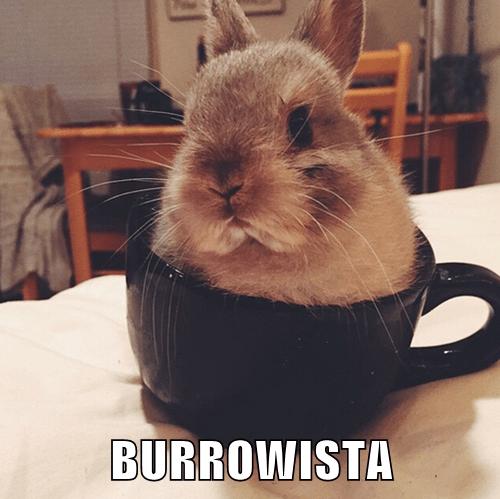 BURROWISTA