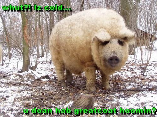 whut?! Iz cold...  u doan hab greatcoat hoomin?