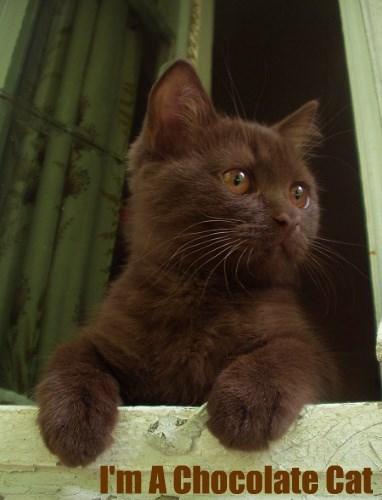 I'm Not A Black Cat