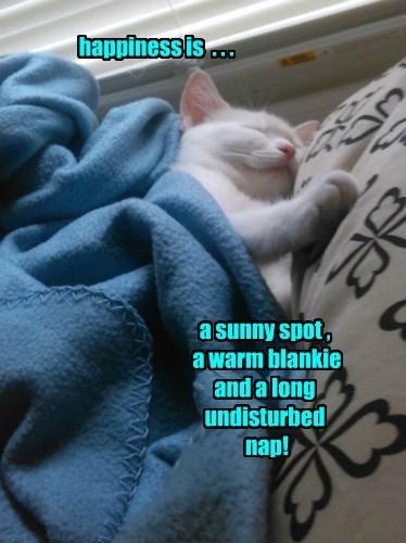 Sunday dreams!