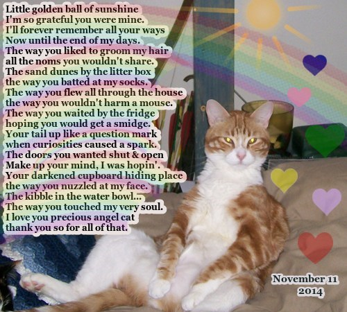 In memory of our beloved cat Sandy Sunball