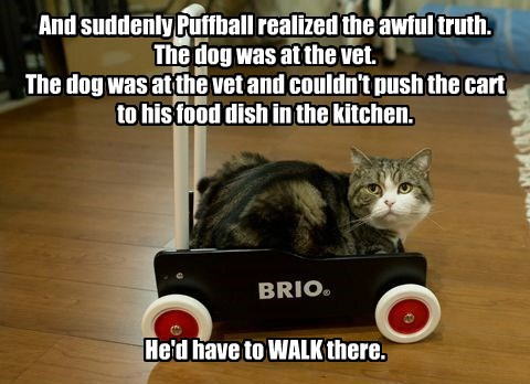 And suddenly Puffball realized the awful truth. The dog was at the vet. The dog was at the vet and couldn't push the cart to his food dish in the kitchen.        He'd have to WALK there.