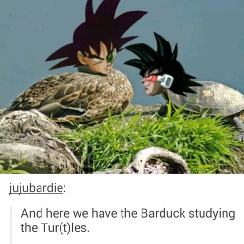 Barduck and Turtles