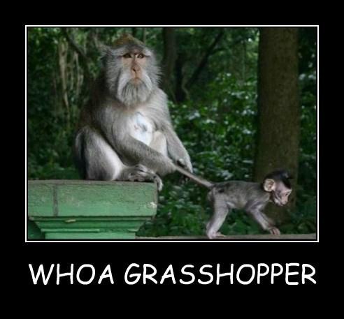mustache,grasshopper,monkey
