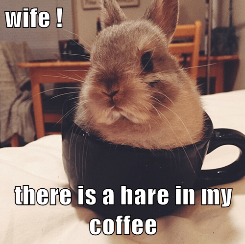 wife !  there is a hare in my coffee