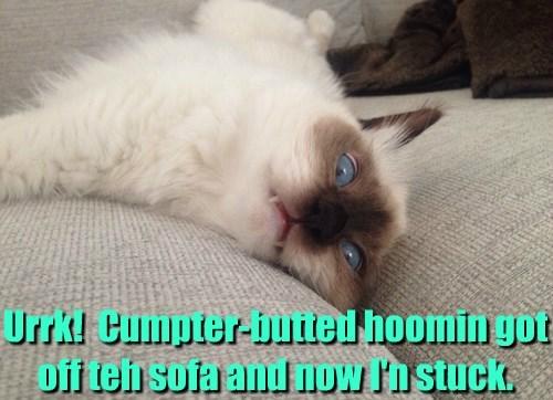 butt,stuck,computer,Cats