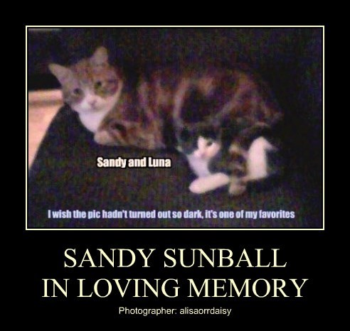 SANDY SUNBALL IN LOVING MEMORY