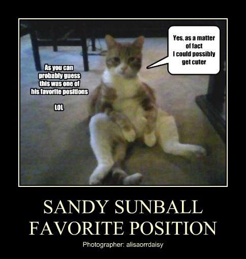 SANDY SUNBALL FAVORITE POSITION