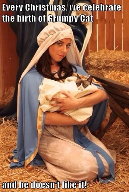 Every Christmas, we celebrate the birth of Grumpy Cat  and he doesn't like it!