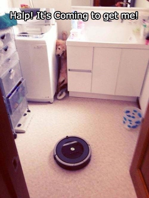 Every Since He Saw Roomba Cat on the Internet