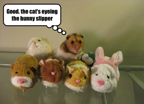 stuffed animals,hamster,hiding,trick