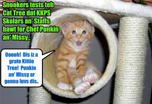 Krafty Katt were so bery happy dat Chef Punkin would remain at KKPS an' not go to teh Seattle Seahawks dat he collected munnies from Skolars an' Staffs to buy a wunnerful Kittie Tree gift for Punkin an' Missy's home!