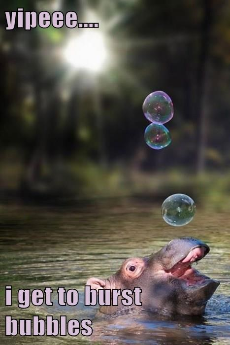 yipeee....  i get to burst bubbles