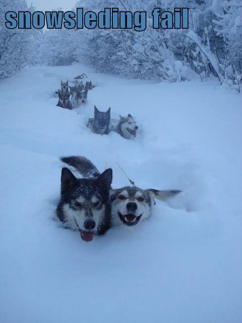 snowsleding fail
