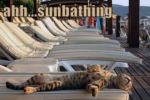 ahh...sunbathing