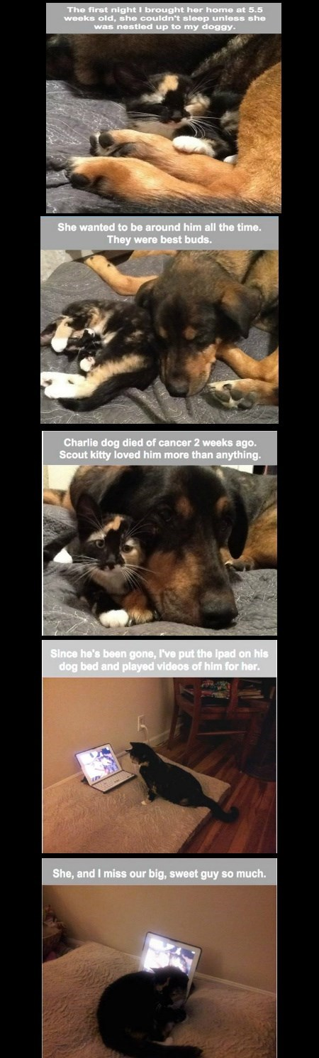 The Love Story Of Charlie And Scout