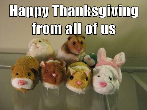 Happy Thanksgiving from all of us