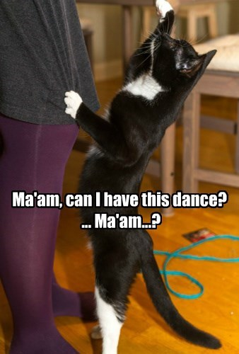 Ma'am, can I have this dance?  ... Ma'am...?