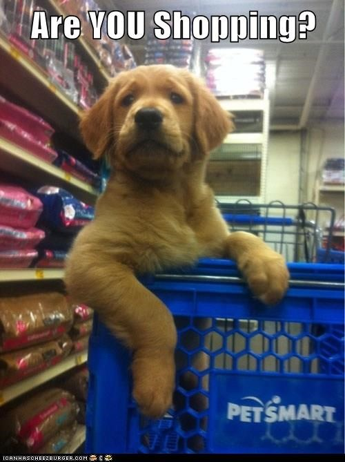 Are YOU Shopping?