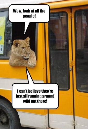 A tourist from the Serengeti takes his first trip to the city.