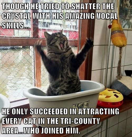 THOUGH HE TRIED TO SHATTER THE CRYSTAL WITH HIS AMAZING VOCAL SKILLS...  HE ONLY SUCCEEDED IN ATTRACTING EVERY CAT IN THE TRI-COUNTY AREA...WHO JOINED HIM.