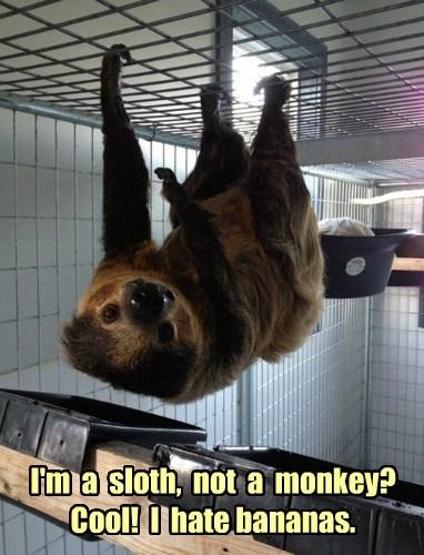 I'm  a  sloth,  not  a  monkey? Cool!  I  hate bananas.