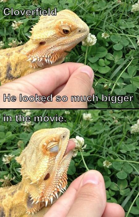 lizard,cloverfield,monster