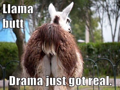 Llama                                    butt  Drama just got real.