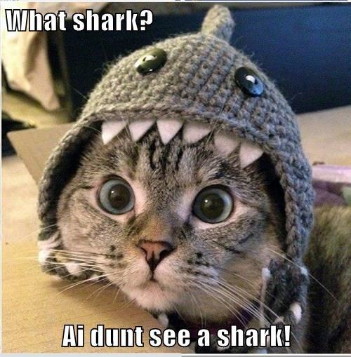 What shark?  Ai dunt see a shark!