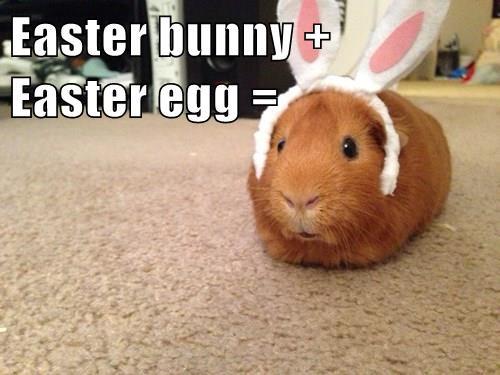 Easter bunny +                           Easter egg =