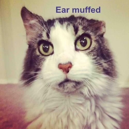 Ear muffed