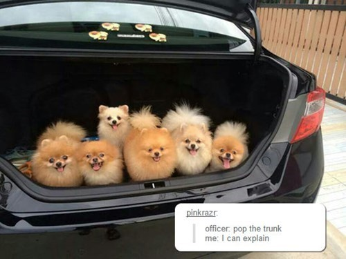 dogs,puppies,tumblr