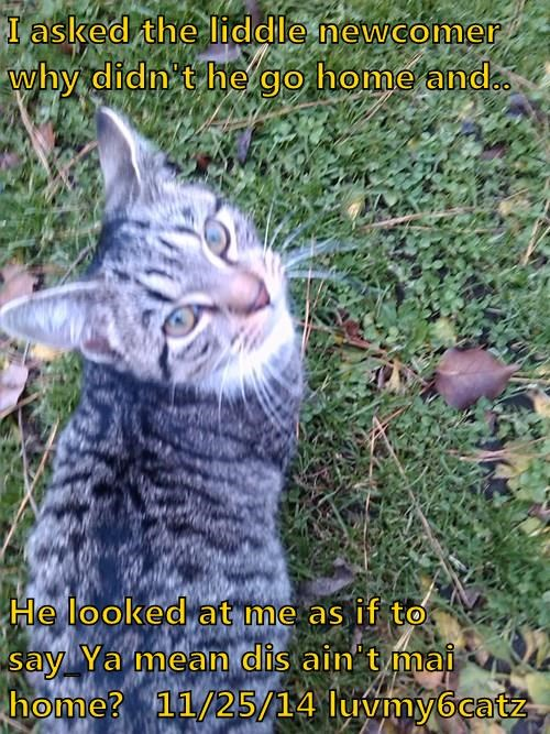 I asked the liddle newcomer why didn't he go home and..  He looked at me as if to say_Ya mean dis ain't mai home?   11/25/14 luvmy6catz