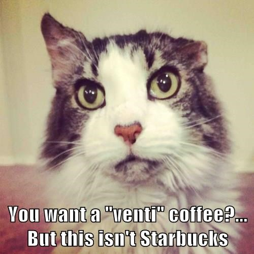 """You want a """"venti"""" coffee?...                                          But this isn't Starbucks"""