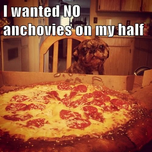 dogs,pizza,you had one job,unhappy,why