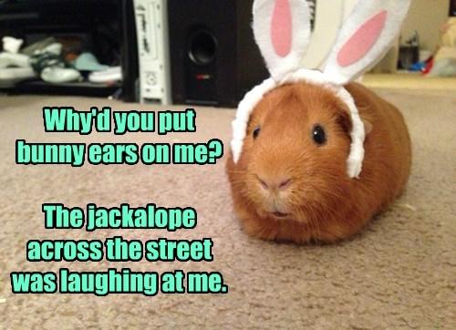 ear,guinea pig,jerk,bunny