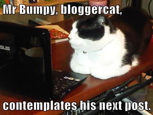 Mr Bumpy, bloggercat,   contemplates his next post.