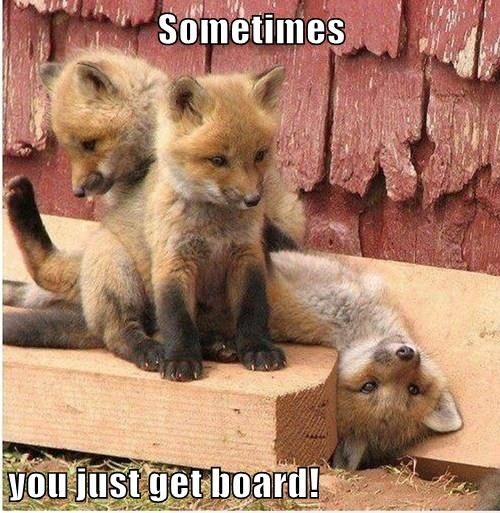 Sometimes  you just get board!