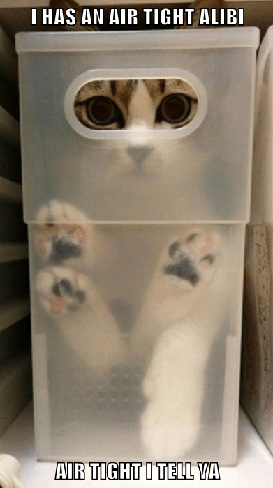 dogs,alibi,Cats